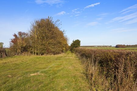 a grassy bridleway with trees and mixed hedgerow in arable countryside in a yorkshire wolds landscape under a blue cloudy sky in autumn