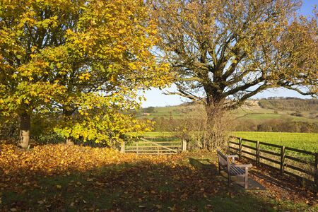 maple and oak trees in autumn with colorful fallen leaves near a wooden bench looking out over a yorkshire wolds landscape under a pale blue sky
