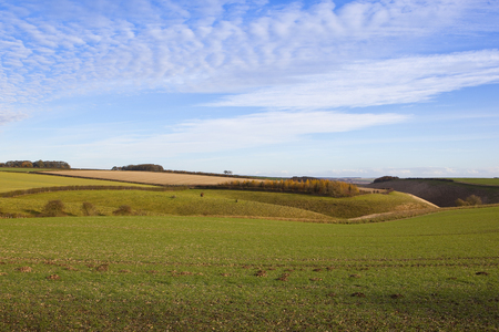 hedgerows: an agricultural valley with grazing pastures in a yorkshire wolds landscape with hills and hedgerows under a blue sky with cloud patterns in autumn Stock Photo