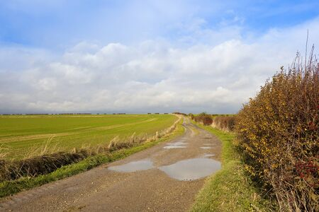 a limestone farm track near a young crop of wheat in a yorkshire wolds landscape with a hawthorn hedgerow under a blue cloudy sky in autumn Stock Photo