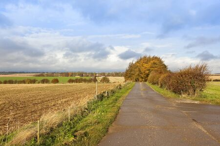 hedgerows: an autumnal larch copse near a public footpath and straw stubble fields in a yorkshire wolds landscape with hills and hedgerows under a cloudy blue sky Stock Photo