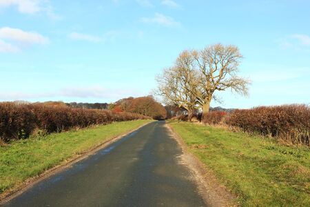 hedgerows: A quiet English country road with hawthorn hedgerows, grass verges and Ash trees in autumn