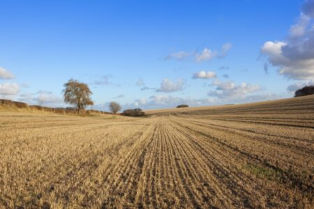 hedgerows: patterned straw stubble in undulating countryside with hedgerows and woodland copses under a blue sky with fluffy clouds in a yorkshire wolds landscape in autumn Stock Photo