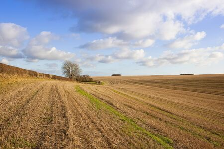 extensive undulating farmland with straw stubble trees and hedgerows in a yorkshire wolds landscape under a blue cloudy sky in autumn