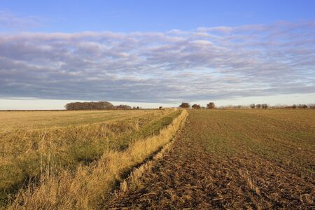 hedgerows: a yorkshire wolds footpath with dry grasses woods and hedgerows beside harvested fields under a blue sky with cloud patterns in autumn Stock Photo