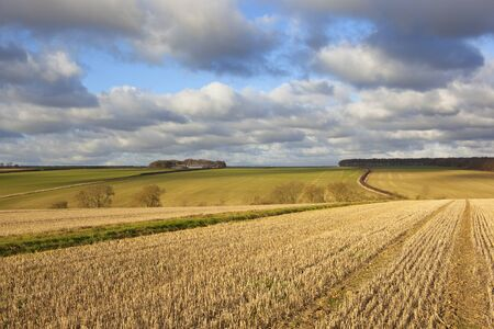 hedgerows: straw stubble fields with woods and hedgerows at harvest time in a yorkshire wolds landscape under a blue cloudy sky Stock Photo