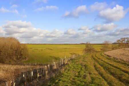hedgerows: a grassy bridleway with hedgerows and fields of crops in an undulating yorkshire wolds landscape under a blue sky with fluffy white clouds