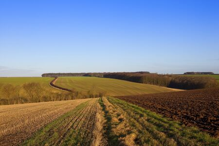 winter agricultural scenery with straw stubble and newly plowed fields in a yorkshire wolds landscape under a clear blue sky