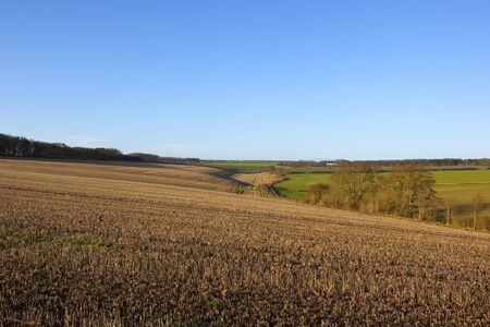 hedgerows: a valley with hillside straw stubble fields woods and hedgerows with a bridleway in a yorkshire wolds landscape under a clear blue sky in winter Stock Photo