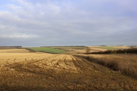patchwork fields in autumn winter with straw stubble and tyre tracks in a yorkshire wolds landscape under a blue sky with cloud patterns