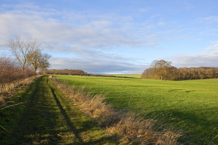 hedgerows: a grassy bridleway beside a green wheat field and woods with crops and hedgerows in a yorkshire wolds landscape under a cloudy blue sky in winter