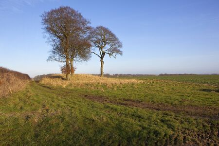 tumulus: three beech trees on a burial mound or tumulus with footpath in a yorkshire wolds landscape under a clear blue sky in winter Stock Photo