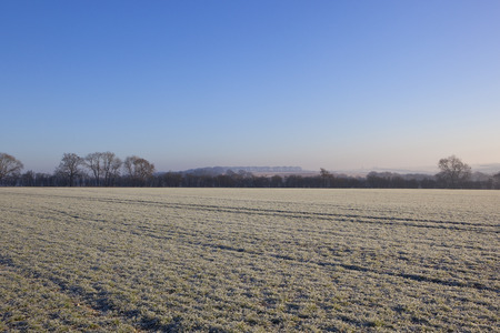 hedgerows: a winter wheat field covered in frost with trees hills and hedgerows in a yorkshire wolds landscape under a clear blue sky