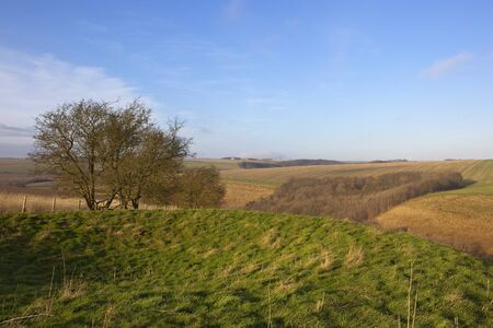 hillsides: an english landscape with hawthorn trees by a grassy burial mound or tumulus in the patchwork hillsides of the yorkshire wolds in winter