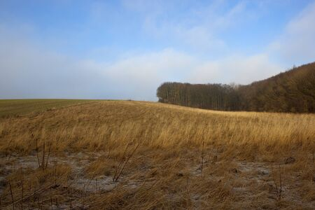 golden dry grasses with a wheat field and woodlands in a yorkshire wolds landscape under a blue cloudy sky in winter