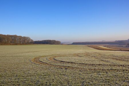 a frosty wheat field with curving tyre tracks in a yorkshire wolds landscape with woodland and hills under a clear blue sky in winter Stock Photo