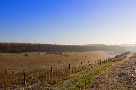a larch woodland with a valley in a frosty yorkshire wolds landscape with hills and hedgerows under a clear blue sky in winter Stock Photo