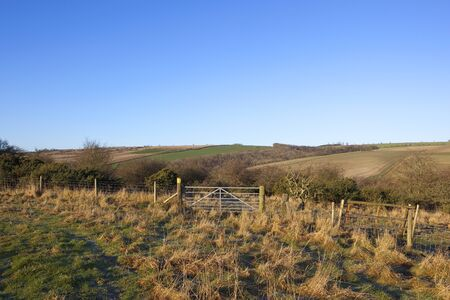 hedgerows: a farm gate on a public bridleway with hills and hedgerows under a clear blue sky in the yorkshire wolds in winter