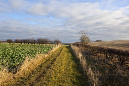 a grassy bridleway in an english landscape with crops dry grasses and scenery under a blue sky with cloud patterns in winter