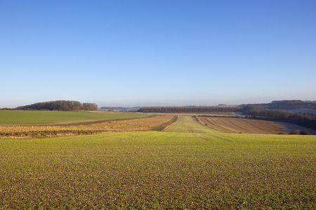 an agricultural vista with woodland hedgerows and crops in a yorkshire wolds landscape under a clear blue sky in winter Stock Photo