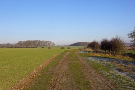hedgerows: a rural bridleway near wheat crops and woodland in a yorkshire wolds landscape with hills and hedgerows under a clear blue sky in winter