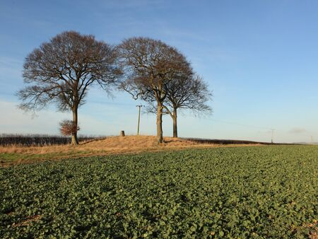tumulus: Three Beech trees on a tumulus with trig point Stock Photo