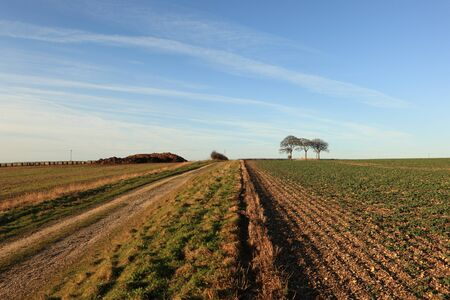 tumulus: Track leading through arable fields to hree beech trees and a trig point on a tumulus or ancient burial mound,and a trig point
