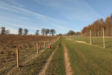 rearing: A track through game rearing pens by woodland in winter
