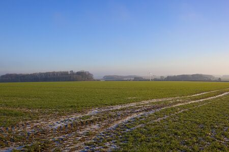 a green wheat field with remnants of snow fall in tyre tracks with a wind turbine and woodland in a yorkshire wolds landscape under a clear blue sky in winter Stock Photo