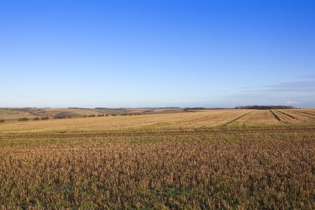 extensive straw stubble fields in a scenic yorkshire wolds landscape with hills hedgerows and woods under a blue sky in winter Stock Photo