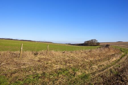 a country bridleway in a yorkshire wolds landscape with crops and dry grasses under a clear blue sky in winter