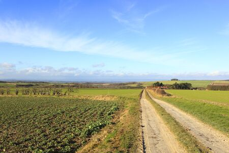 a farm track in scenic agricultural landscape with crops and a view of the vale of york under a blue sky with wispy cloud in winter