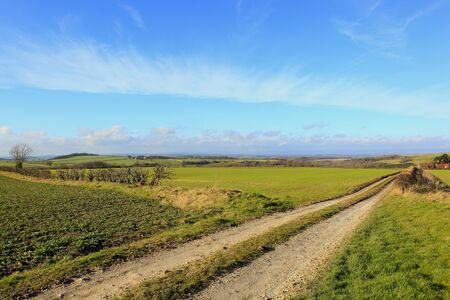 germinación: an english farming landscape with a farm track hills and hedgerows with rapeseed and wheat crops in the yorkshire wolds under a blue sky with wispy cloud in winter