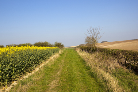 a country footpath going through springtime agricultural landscape with oilseed rape and chalky plowed soil under a blue sky in the yorkshire wolds Stock Photo
