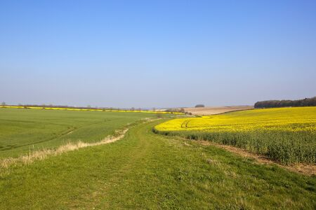 a grassy bridleway near an oilseed rape crop with bright yellow flowers and a view of the vale of york under a clear blue sky in springtime