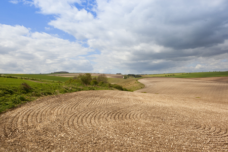 lines and patterns in newly cultivated soil in the undulating scenic landscape of the yorkshire wolds under a blue cloudy sky in springtime