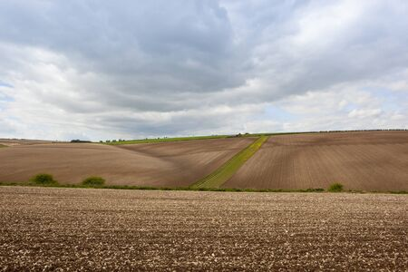 undulating chalky cultivated fields with hedgerows in the yorkshire wolds in springtime under a cloudy sky Imagens