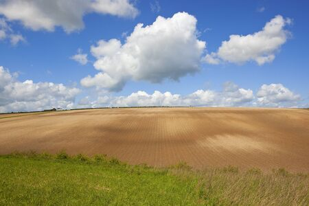 un used: a cultivated hillside with an un used farm in the agricultural landscape of the yorkshire wolds under a blue cloudy sky in springtime