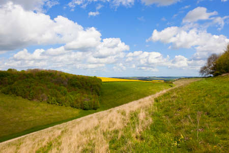 a wooded green valley with dry grasses and crops in front of patchwork fields under a blue cloudy sky in springtime in the yorkshire wolds Stock Photo