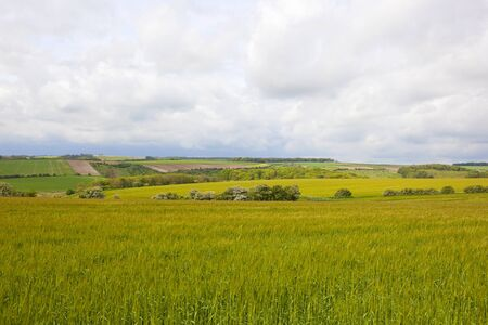 patchwork fields vista in scenic agricultural landscape in the yorkshire wolds under a cloudy sky in springtime
