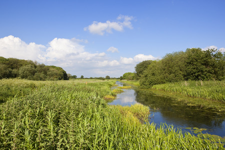 a yorkshire canal and towpath with woodland and reeds in an agricultural setting under a blue cloudy sky in summer
