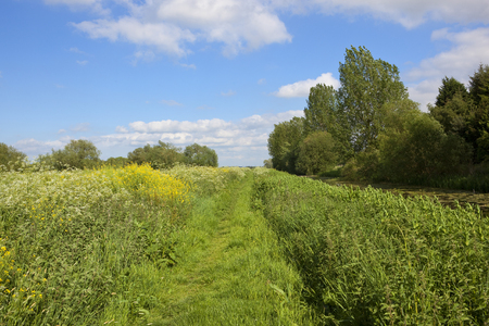 a grassy towpath and canal with woodland and wildflowers in summer under a blue cloudy sky in yorkshire