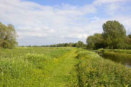 summer meadows with buttercups near a towpath and canal under a blue cloudy sky in yorkshire Stock Photo