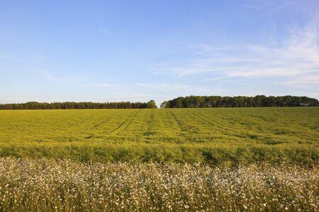 Healthy Grass field. Stock Photo