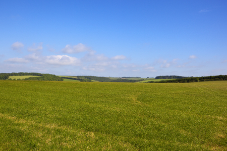 a scenic grazing meadow in the yorkshire wolds under a blue sky in summer with patchwork fields and woodland