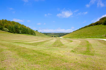 a freshly cut grazing meadow with line sand patterns in the scenic yorkshire wolds with pine woods under a blue sky in summer Stock Photo