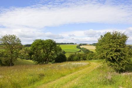 a grassy scenic footpath going through patchwork field scenery with hills hedgerows and wildflowers under a blue cloudy sky in the yorkshire wolds in summer