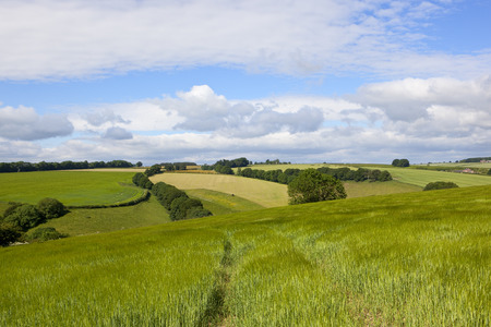 undulating arable farmland in the yorkshire wolds with hills and hedgerows under a blue cloudy sky in summer