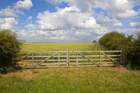 a new wooden farm gate in front of a ripening wheat field with hawthorn hedgerows under a blue summer sky in the yorkshire wolds
