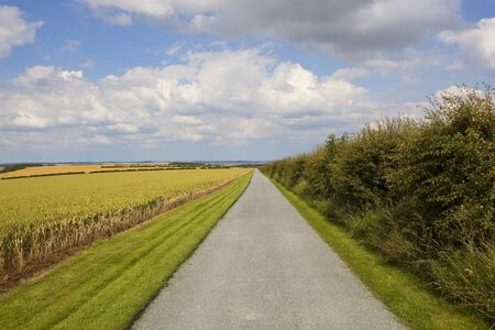 a resurfaced farm road with chippings in the scenic yorkshire wolds with a hawthorn hedgerow and newly cut grass verges under a summer blue sky with white cloud